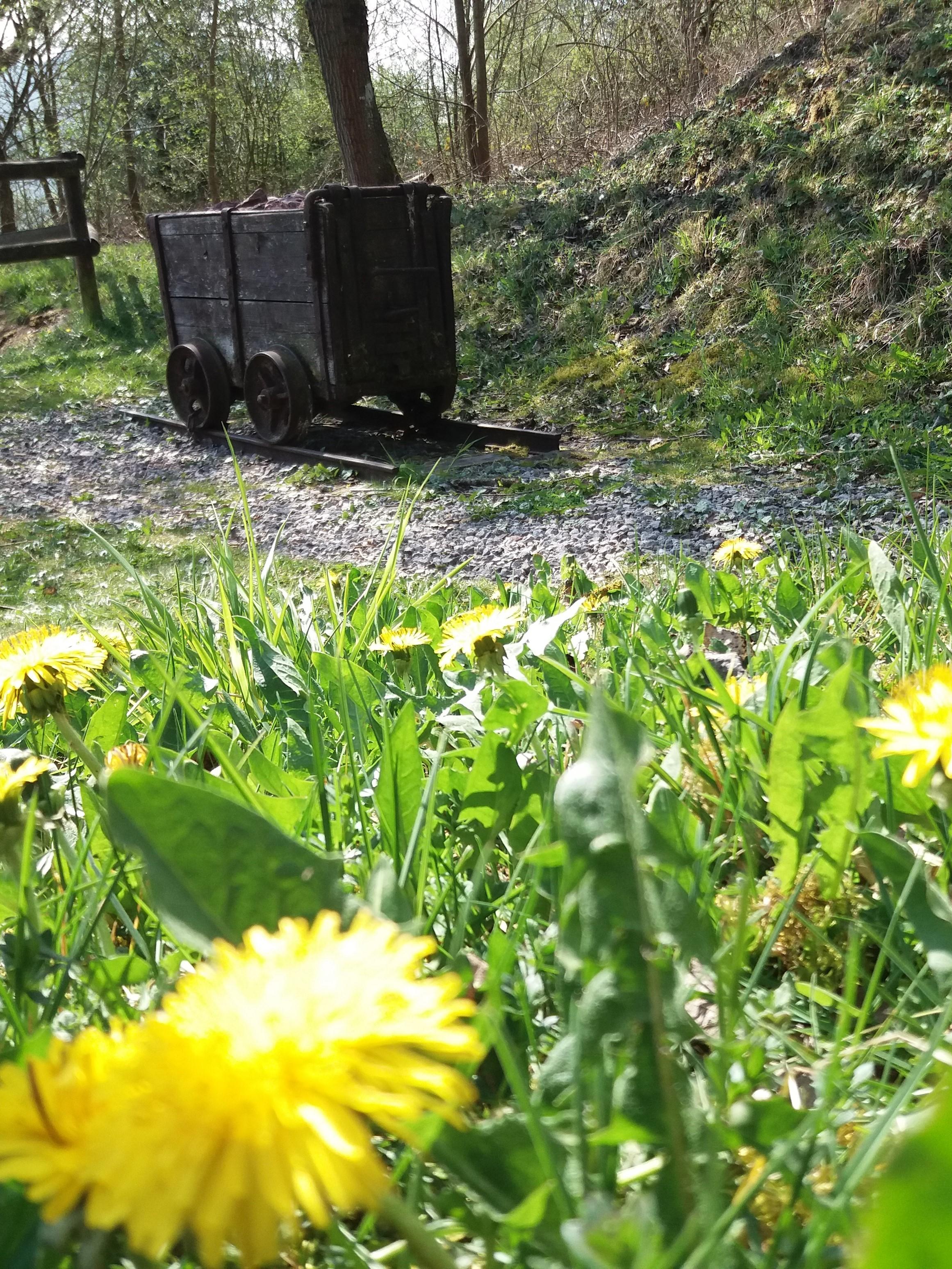 Frühling am Philippstollen